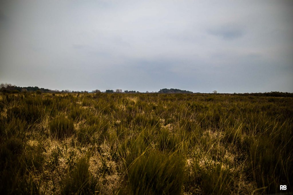 reserve-naturelle-du-pinail