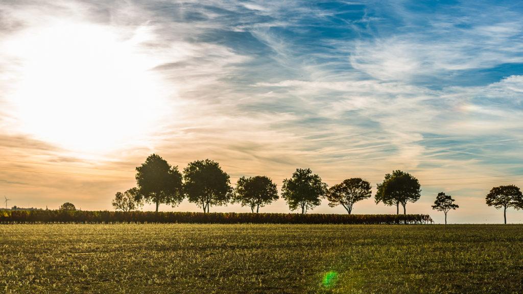 couché de soleil avec des arbres à la campgane