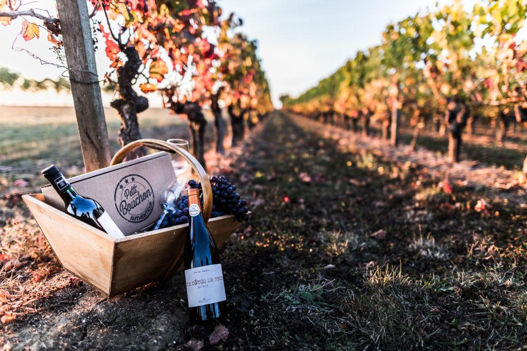 panier gourmand dans une vigne avec des bouteilles de vin - Photo pour le site ptit bouchon, vente de vin en ligne