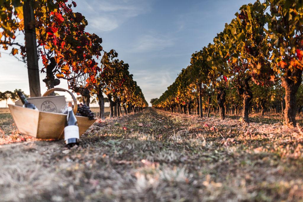 vigne - Photo pour le site ptit bouchon, vente de vin en ligne